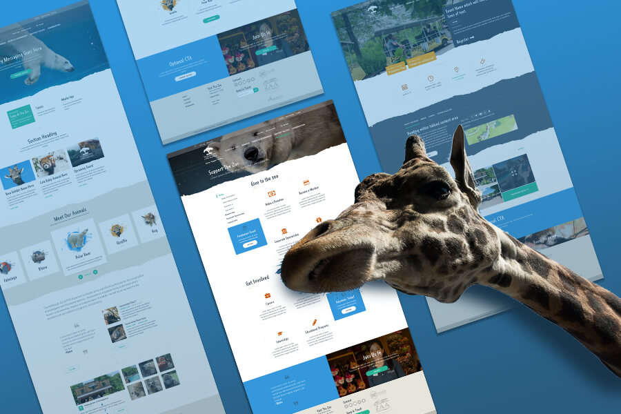 pittsburgh zoo website design challenge