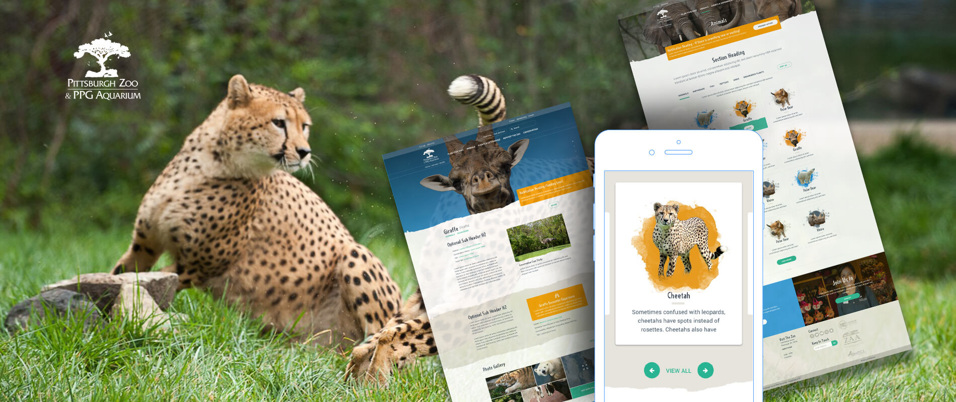 pittsburgh zoo blue archer web design case study